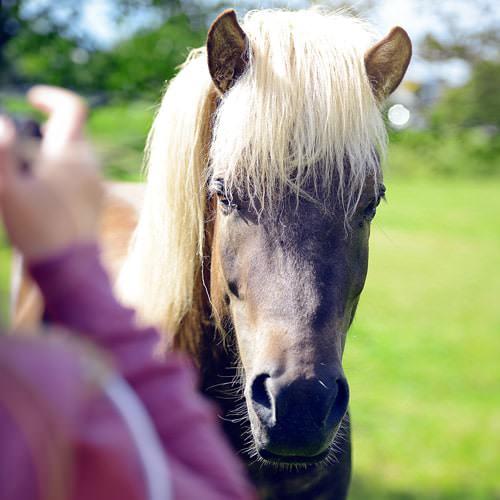 Pferdesport-So-lernt-man-fotografieren-Pferdekoppel-Reitsport-Fotokurs-Verschlusszeit-Autofokus-Sportfotograf-Actionfotograf