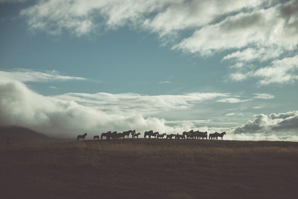 Explore Iceland / Island 2017